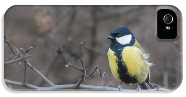 Passeridae iPhone 5 Cases - Male Great Tit iPhone 5 Case by Jivko Nakev