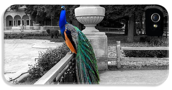 Central Il iPhone 5 Cases - Male Peacock Bird Selective Coloring iPhone 5 Case by Thomas Woolworth