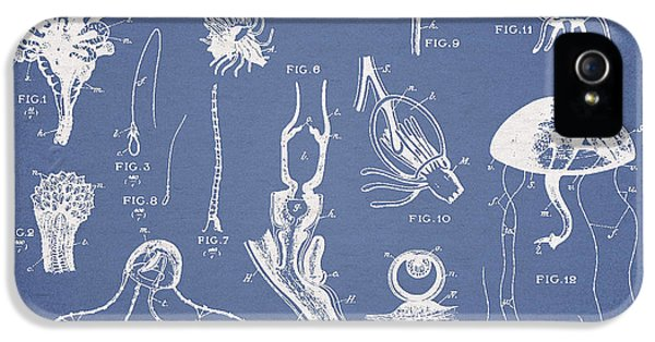 Polyp iPhone 5 Cases - Marine Organisms Hydromedusae iPhone 5 Case by Aged Pixel