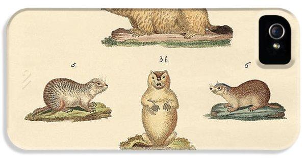 Marmots And Moles IPhone 5 / 5s Case by Splendid Art Prints