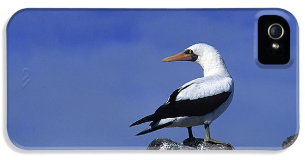Masked Booby Bird IPhone 5 / 5s Case by Thomas Wiewandt