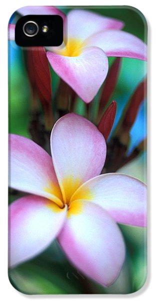 Plumerias iPhone 5 Cases - Maui Plumeria iPhone 5 Case by Kathy Yates