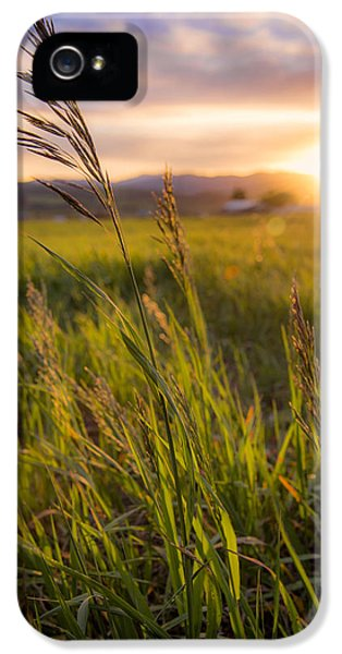 Meadow iPhone 5 Cases - Meadow Light iPhone 5 Case by Chad Dutson
