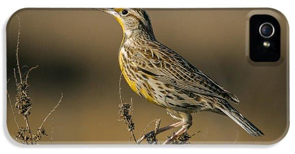 Meadowlark On Weed IPhone 5 / 5s Case by Robert Frederick
