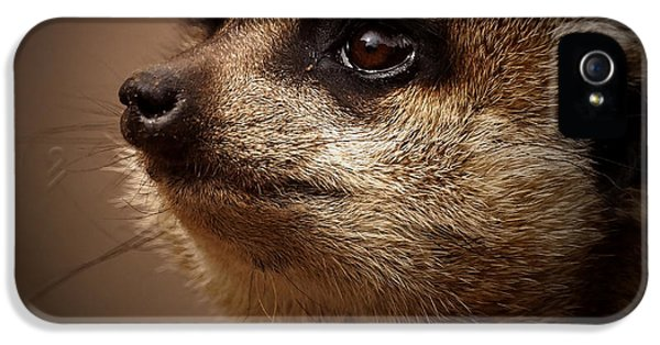 Meerkat 6 IPhone 5 / 5s Case by Ernie Echols