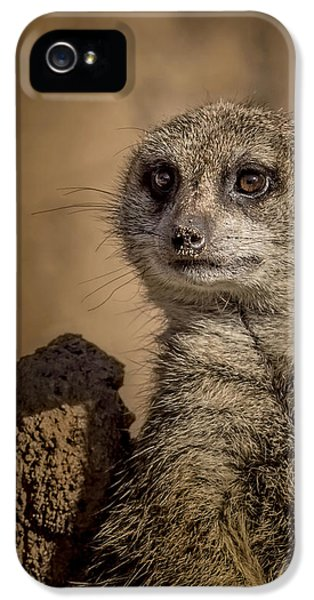 Meerkat IPhone 5 / 5s Case by Ernie Echols