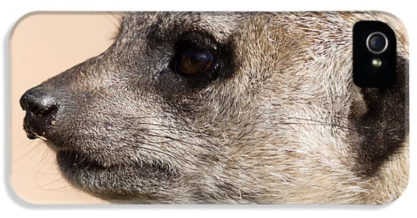 Meerkat Mug Shot IPhone 5 / 5s Case by Ernie Echols