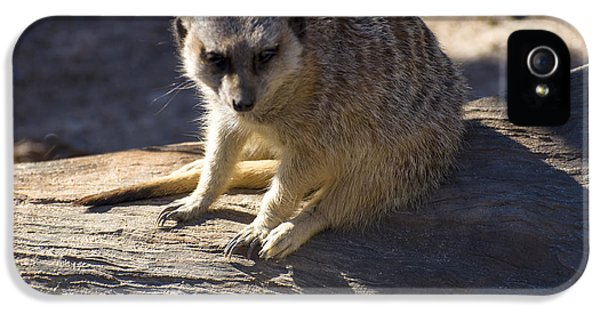 Meerkat Resting On A Rock IPhone 5 / 5s Case by Chris Flees