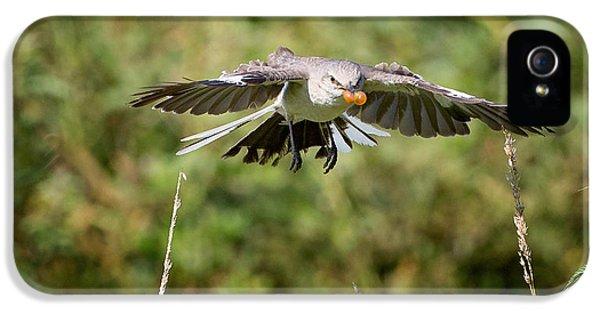 Mockingbird In Flight IPhone 5 / 5s Case by Bill Wakeley