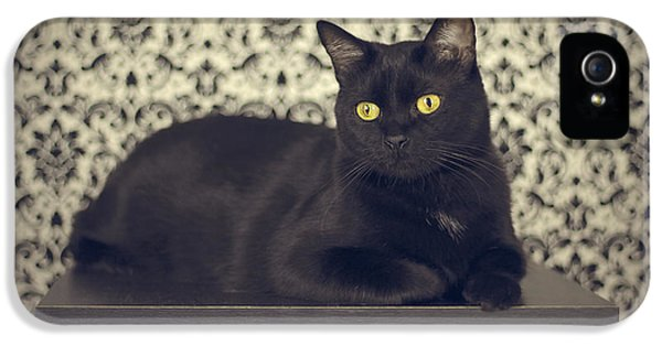 Black Cat iPhone 5 Cases - Mongo The Robust Cat iPhone 5 Case by Jennifer Ramirez