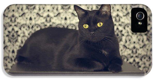 Mongo The Robust Cat IPhone 5 / 5s Case by Jennifer Ramirez