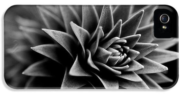 Black And White iPhone 5 Cases - Monkey Puzzle iPhone 5 Case by Venetta Archer