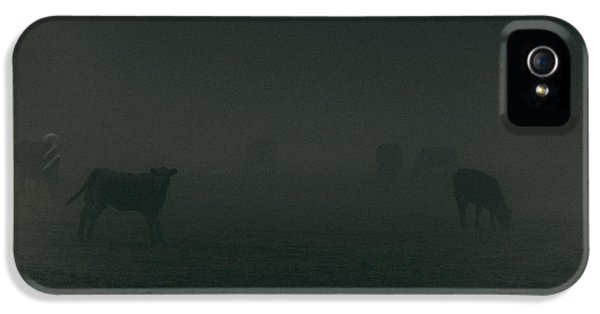 Agricultural iPhone 5 Cases - Mooing in the mist iPhone 5 Case by Chris Fletcher