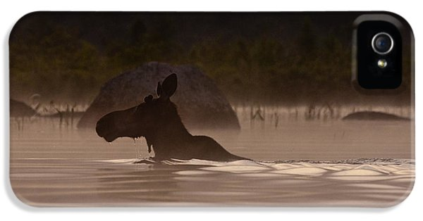 Moose Swim IPhone 5 / 5s Case by Brent L Ander