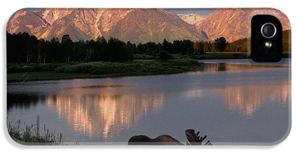 Morning Tranquility IPhone 5 / 5s Case by Sandra Bronstein