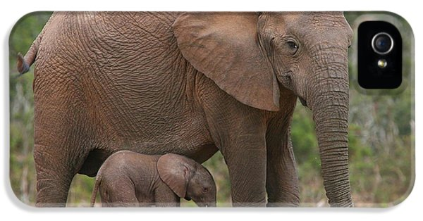 Elephant iPhone 5 Cases - Mother and Calf iPhone 5 Case by Bruce J Robinson