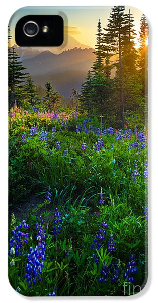 Tourism iPhone 5 Cases - Mount Rainier Sunburst iPhone 5 Case by Inge Johnsson