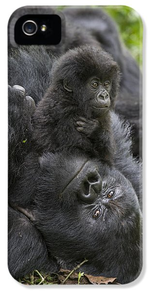 Mountain Gorilla Baby Playing IPhone 5 / 5s Case by Suzi  Eszterhas