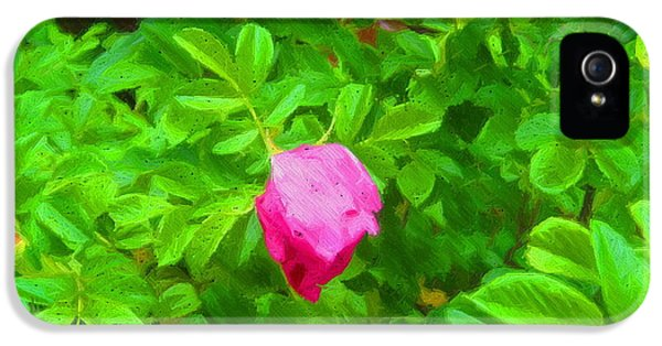 Prickly Wild Rose iPhone 5 Cases - Mountain Rose iPhone 5 Case by John Kreiter