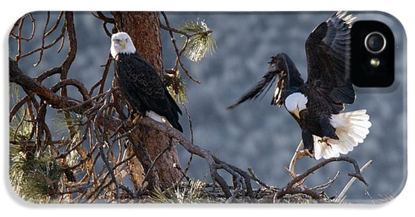 American Bald Eagle iPhone 5 Cases - Move Over iPhone 5 Case by Mike Dawson