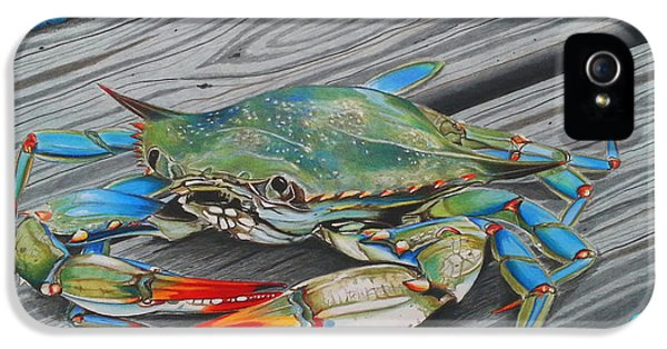 Blue Crab iPhone 5 Cases - Mr. Jimmy iPhone 5 Case by Karen Rhodes