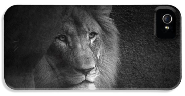 Mr Lion In Black And White IPhone 5 / 5s Case by Thomas Woolworth
