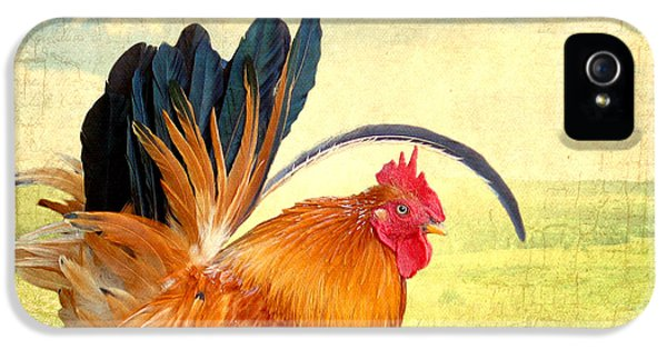Greet iPhone 5 Cases - Mr. Rooster Greets the Day iPhone 5 Case by Lisa Knechtel