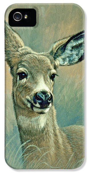 Muley Fawn At Six Months IPhone 5 / 5s Case by Paul Krapf
