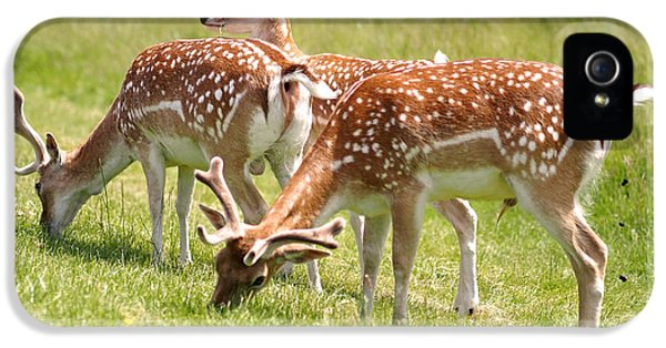 Multitasking Deer In Richmond Park IPhone 5 / 5s Case by Rona Black