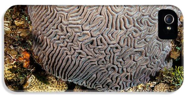 Polyp iPhone 5 Cases - My brain underwater iPhone 5 Case by Jean Noren
