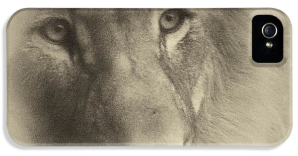 Central Il iPhone 5 Cases - My Lion Eyes in Antique iPhone 5 Case by Thomas Woolworth