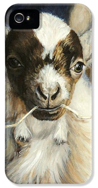 Nigerian Dwarf Goat With Straw IPhone 5 / 5s Case by Dottie Dracos