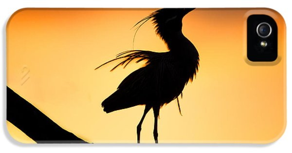 Orange iPhone 5 Cases - Night Heron Silhouette 2 iPhone 5 Case by Andres Leon