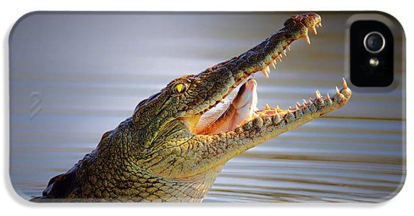 Prey iPhone 5 Cases - Nile crocodile swollowing fish iPhone 5 Case by Johan Swanepoel