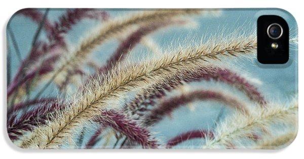 Chlorophyll iPhone 5 Cases - Nodding Foxtail iPhone 5 Case by Douglas Barnett