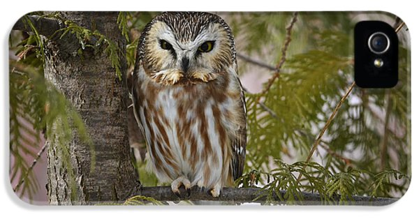 Northern Saw Whet Owl IPhone 5 / 5s Case by Gary Hall