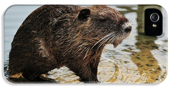Nutria IPhone 5 / 5s Case by Photostock-israel
