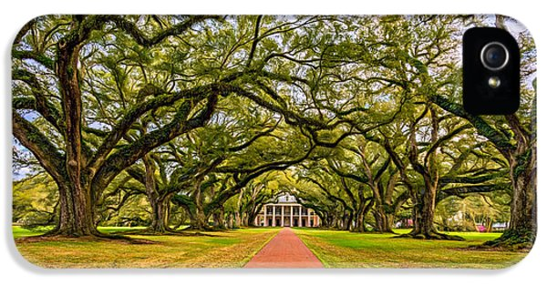 Historic Oak iPhone 5 Cases - Oak Alley Plantation - Paint iPhone 5 Case by Steve Harrington