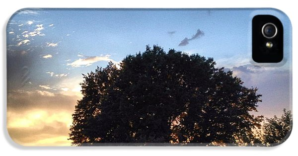 Cloud iPhone 5 Cases - Oak Tree at the Magic Hour iPhone 5 Case by Angela Rath