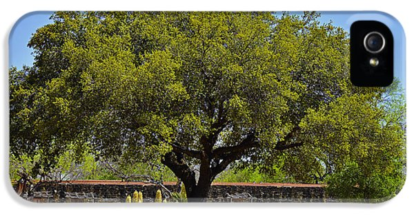 Historic Oak iPhone 5 Cases - Oak Tree Mission San Jose TX iPhone 5 Case by Christine Till