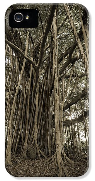 Old Banyan Tree IPhone 5 / 5s Case by Adam Romanowicz