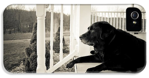 Porch iPhone 5 Cases - Old dog on a Front Porch iPhone 5 Case by Diane Diederich