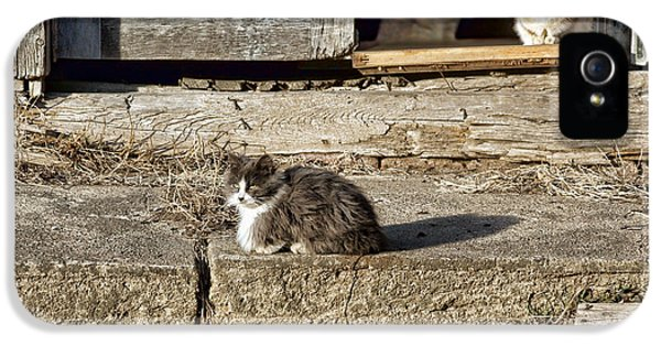 Patiently iPhone 5 Cases - Old Knox Church Cats #2 iPhone 5 Case by Nikolyn McDonald