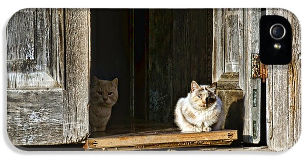 Patiently iPhone 5 Cases - Old Knox Church Cats iPhone 5 Case by Nikolyn McDonald