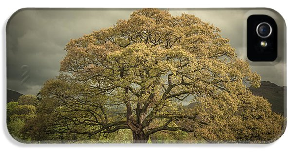 The Old Oak Of Glenridding IPhone 5 / 5s Case by Chris Fletcher