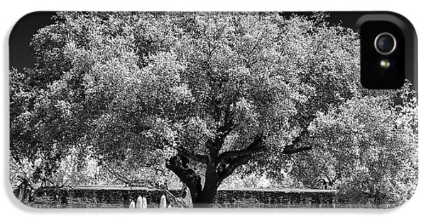 Historic Oak iPhone 5 Cases - Old Oak Tree Mission San Jose iPhone 5 Case by Christine Till