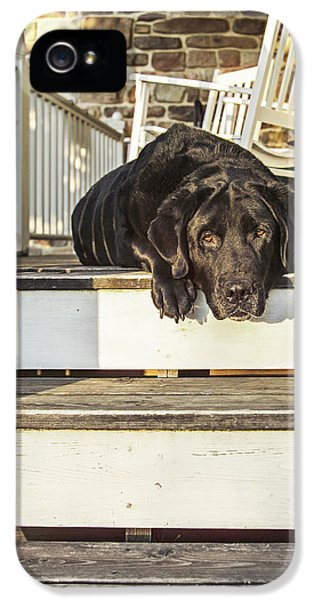 Porch iPhone 5 Cases - Old Porch Dog iPhone 5 Case by Diane Diederich