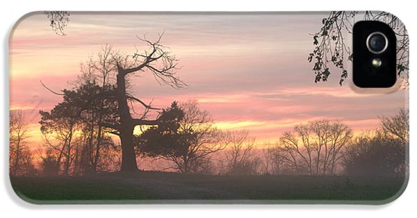 Beautiful Old Tree iPhone 5 Cases - Old Tree At Sunset iPhone 5 Case by Brian Harig