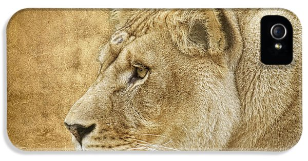 Lion iPhone 5 Cases - On Target iPhone 5 Case by Steve McKinzie
