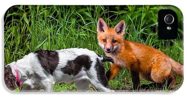 Fox Kits iPhone 5 Cases - On the Scent iPhone 5 Case by Steve Harrington